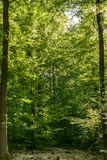 In the woods, Stuttgart Royalty Free Stock Photos