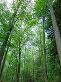 Woods In Summer. Thick woods with lots of undergrowth in summer royalty free stock images