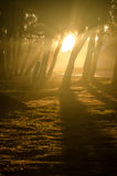 Woods and sunlight background Stock Image