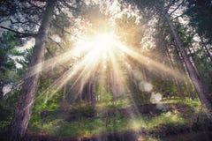 Woods sunlight Royalty Free Stock Photos