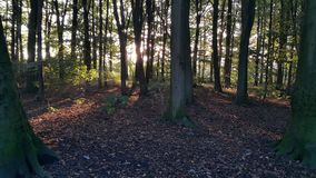 The woods at sunset. Dutch woods at sunset Stock Photography