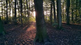 The woods at sunset. Dutch woods at sunset Stock Photos