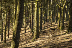 Woods at Tandle Hill, Royton Royalty Free Stock Photos