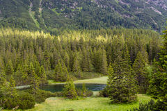 Woods at Tatra National Park. Tatra National Park, Zakopane, Poland royalty free stock images