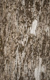 Woods. Texture of old tree bark with moss close up royalty free stock photos