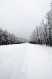 Through the Woods. Thick snow blankets road in between rows of snow covered trees Stock Photography