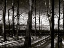 In the woods today. Trees and their shadows in upstate New York Royalty Free Stock Photo