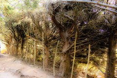 Into the woods. Tranquil travel destinations. Into the woods we go Royalty Free Stock Photo