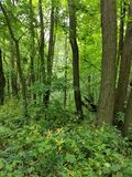 Woods of Green. Woods with trees and alot of greenery Royalty Free Stock Images