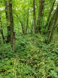 Woods of Green. Woods with trees and alot of greenery Royalty Free Stock Photo