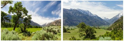 Trees green grass meadow mountains collage. Woods trees in high rocky mountain rural country landscape scene scenic view forest  blue sky green grass meadow Stock Photography