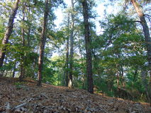 Woods Uphill. Uphill image of the woods royalty free stock photos