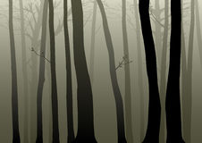 Woods. Vector illustration of misty woods Royalty Free Stock Photography