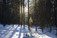 Woods at winter Royalty Free Stock Image