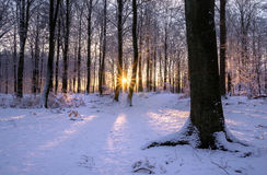 Woods. In Winter colors at synset Stock Images