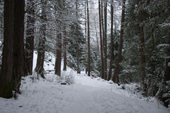 The woods in a winter day. This picture was taken when I was doing hiking in the woods in the Alps mountains of Switzerland Royalty Free Stock Photography