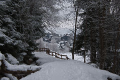 The woods in a winter day. This picture was taken when I was doing hiking in the woods in the Alps mountains of Switzerland Stock Photography