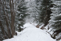 The woods in a winter day. This picture was taken when I was doing hiking in the woods in the Alps mountains of Switzerland Royalty Free Stock Photos