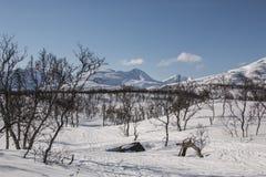 Woods winter mountain. Ski tracks through the woods in winter. Mountains in background Royalty Free Stock Photos