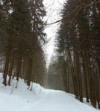 Woods In Winter With Tall Trees Stock Images