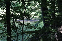 In the woods. Wooded area with a creek behind the branches Royalty Free Stock Image
