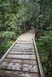 Into the Woods. A wooden hiking path leading into dense green forest Stock Images
