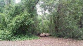 Woodscape στοκ φωτογραφίες με δικαίωμα ελεύθερης χρήσης