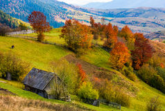 Woodshed on grassy hillside with reddish trees. Gorgeous autumn scenery in mountainous rural area royalty free stock images