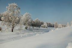 Woodside del invierno con los abedules en nieve profunda Fotos de archivo