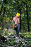 A woodsman in forest Stock Images