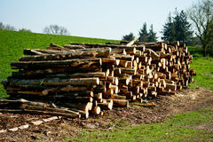 Woodstack. A stack of wood on a field Royalty Free Stock Photo