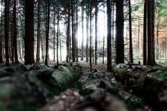 Woodstack con los árboles cortados en fondo fotografía de archivo libre de regalías