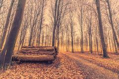 Woodstack in a forest sunrise. Early in the morning Stock Image