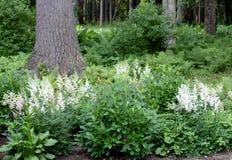 Woodsy ρύθμιση με τα δέντρα, τις φτέρες και τα λουλούδια κάτω από τη σκιά και τους ηλιόλουστους ουρανούς στοκ φωτογραφία