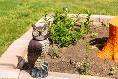 Woodsy the decoy owl protecting the garden. Plants stock image