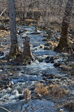 Woodsy mountain river 1. A small woodsy mountain river in late autumn Stock Image