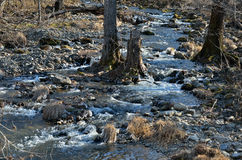 Woodsy mountain river. A small woodsy mountain river in late autumn Royalty Free Stock Images