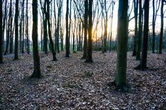 Woodtree lizenzfreie stockfotografie