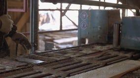 Woodworker управляет промышленной машиной пилы с журналом пиломатериала видеоматериал