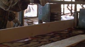 Woodworker управляет промышленной машиной пилы с журналом тимберса акции видеоматериалы
