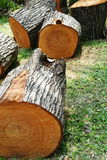 woodworking images libres de droits