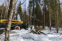 Woodworking in forest. Image of logger works Royalty Free Stock Photos