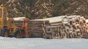 Woodworking plant.Forest industry. Woodworking plant.Forest logs, unload the tractor, transporting the logs in a forest. Forest industry.The logs are prepared stock video footage