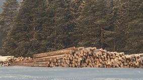 Woodworking plant.Forest industry. Woodworking plant.Forest logs, unload the tractor, transporting the logs in a forest. Forest industry.The logs are prepared stock footage