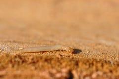 woodworm стоковое фото rf