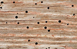 Woodworm Stock Photo