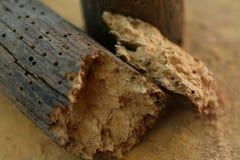 Woodworm dziury Zdjęcie Royalty Free