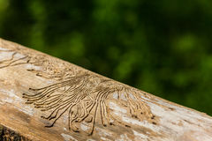 Woodworm pattern in dried birch tree in the forest Stock Photography