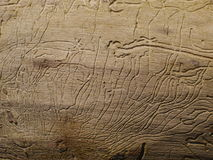 Woodworm's traces Stock Photography