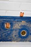woodworms Стоковые Фотографии RF